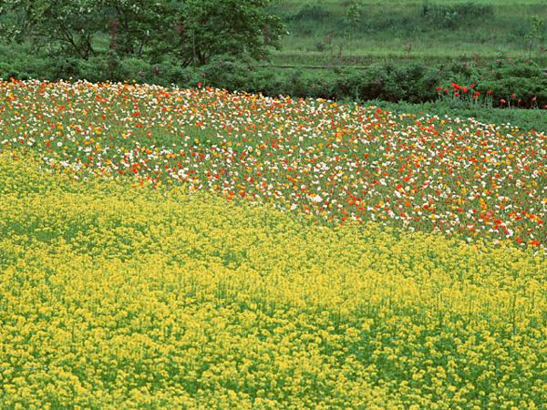 17種類の植物エキス配合