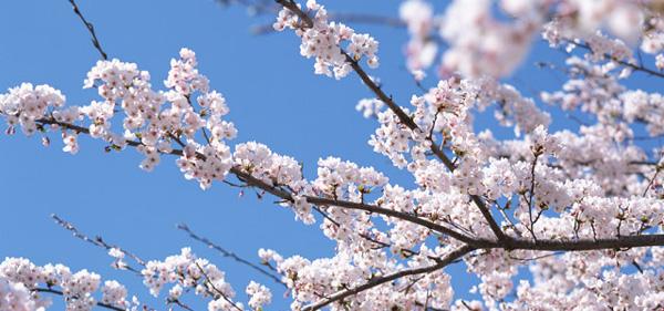 美容成分は春先に起こりやすい