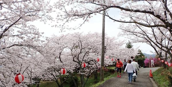 瀬戸内しまなみ海道の開山公園の1000本桜