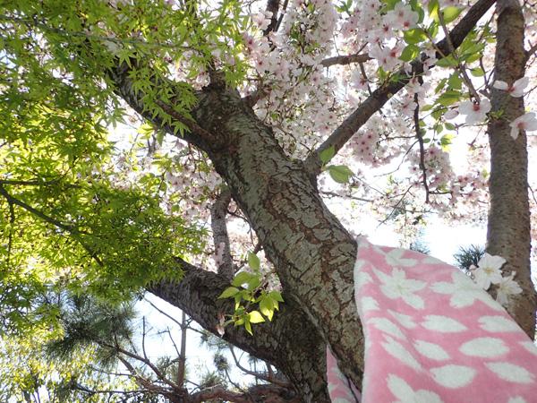 伊織の福袋!夏のハッピーパック桜