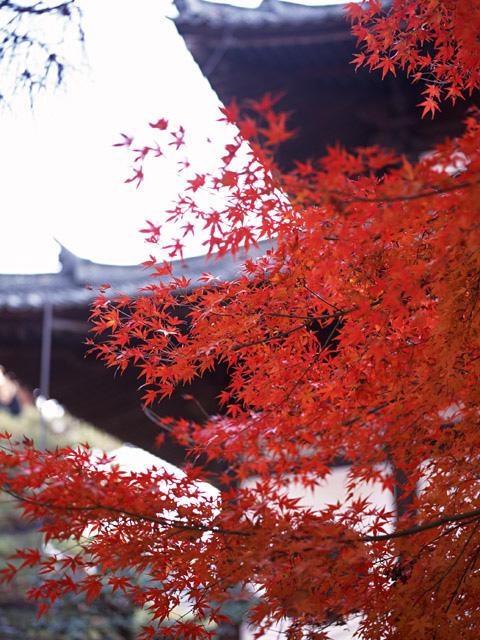 京都を旅する